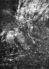 Aquí descansa Cthulhu / Cthulhu spring (SBA73) Tags: plate dryplate gelatinobromuro gelatinobromure gelatinobromur jasonlane jlanedryplate hc110 9x12 lf largeformat ancient old vintage bw alternativephotography filmisnotdead filmisalive filmphotography traydevelopment rec riera stream nature colobrers sabadell vallèsoccidental longexposition german alemana regalims ernemann heag heagi font tosca fuente spring monstre monster primigenial hplovecraft lovecraft theancientones chtulhu