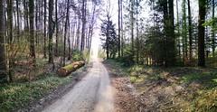 IMG_20190412_095427 (eduard43) Tags: wald forest bäume trees waldwege rafz 2019