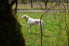P1080142 (mireiatarres) Tags: dog perro animales outside