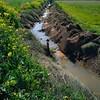 Una acequia como las de antes (Micheo) Tags: acequia riego water agua campos fields verde green cultivos crops vegadegranada jaramagos sembrados