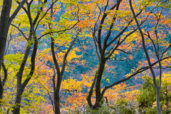 Autumn at Mt Takao 2 (lorderikir) Tags: takao mountain autumn koyo japan tokyo