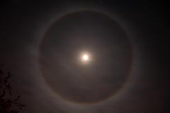hello halo (husiphoto) Tags: halo lichteffekt mond moon kreis circle licht light himmel sky reflexion brechung eiskristalle ice crystals natur nature astro nikon d750 nikkor reflection refraction
