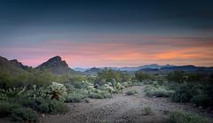 Sonoran Desert_20190120.jpg (ZackSGuido) Tags: tucson landscape desert sonorandesert nature
