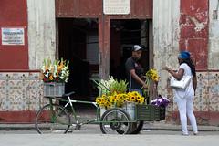 _DSC8282 (frangher) Tags: lavana lahabana cuba people persone viaggi vitadistrada street streetlife streetphotography fiori fiorista flowers travel nikon d3100 nikonflickraward flickrtravelaward