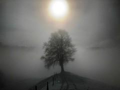 Wintertag an der Nebelgrenze (Martinus VI) Tags: hivers winter winterlandschaft wintertag emmental kanton de canton bern berne berna berner bernese schweiz suisse suiza switzerland svizzera swiss y190202 fog brouillard brume nebuleuse mist nebula nebbia bruma niebla nebel