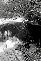 A little pond in Winter 01 (shou yokoya) Tags: film 135 35㎜ analogue acros 100 nikon nikonfm nikkor 28f28 pond winter tree water snow ice