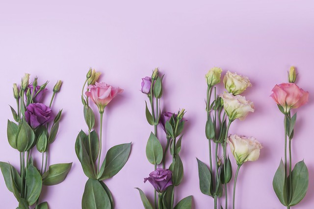 Обои цветы, фон, pink, flowers, purple, эустома, eustoma картинки на рабочий стол, раздел цветы - скачать