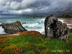 The Elephant (Dave Heaphy) Tags: clouds water waves pacificocean sonomacoast driftwood