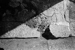 Texturas (Celso Kuwajima) Tags: bw leicam4 leicasuperangulon13421mm kodaktmax100 20190243 analogphotography texture mairinque sãopaulo brazil br