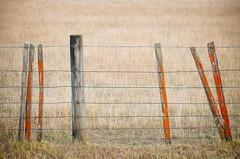 Rustic fence (dave.fergy) Tags: fence dawn orange countryside rural rustic minimalist simple