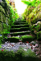 Into The Light (fred.sommer11) Tags: grün green stairs jungle maya aztec azteken dschungel natur nature leaves leaf fall autumn summer spring moos steps office uphill walking wander trip tour vacation ruins tribe village forest stones rocks wall path exotic expedition excursion