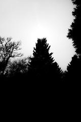 Light And Dark (Isengardt) Tags: light licht dark dunkel dunkelheit darkness monochrome monochrom bäume trees nature natur silhouette shadows schatten sonne sun sunny sonnig schwarz weiss black white bw sw olympus omd em1 1250mm stuttgart badenwürttemberg deutschland germany europe europa waldfriedhof woods wald wälder cemetary