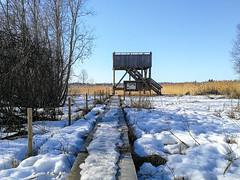 Honkalanranta | Hämeenlinna, Finland (Mtj-Art - Thanks for over 2 million views :)) Tags: hämeenlinna honkalanranta talvi winter kevät pitkospuut laavu nuotiopaikka luonnosuojelualue markuskauppinen huawei matkapuhelinvalokuvaus smartphonephotography sunny aurinkoista nature luonto luontokuva valokuvia hämeenlinnasta valokuviahämeenlinnasta