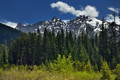 I Crave to See I Snowcapped Mountains (thor_mark ) Tags: azimuth119 blueskies bluesskieswithclouds bridgecreektrailhead bridgecreektrailheadparkingarea capturenx2edited cascaderange colorefexpro day8 drivetowashingtonpassoverlook evergreentrees evergreens grassyarea grassyfield grassymeadow hillsideoftrees jackknifepeak landscape lookingse meadows methowmountains mountainpeak mountains mountainsindistance mountainsoffindistance mountainside nature nikond800e northcascades northcascadeshighway northcascadesnationalparkservicecomplex northcascadesscenichighway okanogannationalforest okanoganwenatcheenationalforest outside pacificranges partlycloudy project365 ridgeline rollinghillsides snowonfaroffmountainpeaks snowcapped southwashingtonpass stilettopeak stillettopeak sunny switchbladepeak talltrees trees triptonorthcascadesandwashington wastateroute20 okanoganwenatcheenationalfore washington unitedstates