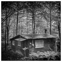 _DSC6938-Mr-2 (gillesporlier) Tags: house old maison foret forest arbres trees monochrome bnw noiretblanc