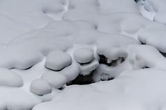 Snowscape (Bracus Triticum) Tags: snowscape アルバータ州 alberta canada カナダ 12月 december winter 2018 平成30年 じゅうにがつ 十二月 jūnigatsu 師走 shiwasu priestsrun