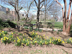 DSCN5726 (littlereview) Tags: dc littlereview 2019 nationalcathedral church flower garden spring blog
