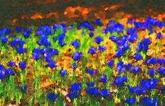 Fields of Iris (LotusMoon Photography) Tags: abstract flowers iris painterly photomanipulation filterforge watercolor bright colorful colors vividcolor vivid vibrant spring seasons postprocessed impressionist manipulated annasheradon lotusmoonphotography