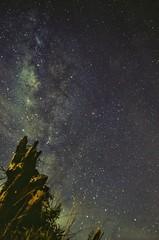 Viejo arbol (wujuanca) Tags: astrophotography astrofotografía vialáctea milkyway longexposure nikond5100 colombia nightshot night star