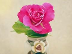 Winter Rose in my house (al.scuderi71) Tags: purple rosa open aperta on1pics panasonic gh4 raw on1 photo nature fiori flower flowers vaso