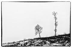 Dreariness [monochrome edition] (gabormatesz) Tags: blackandwhite landscape landscapes canon hungary monochrome nature naturephotography desolation