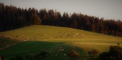 DSC05675 (ursrüegsegger) Tags: linden juli august getreideernte bauernhöfe landschaft regenbogen