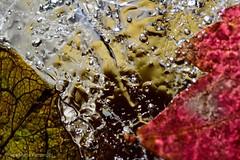 Glace, jeux de couleur et lumière (Anabelle67) Tags: glace hiver colorful couleur flickr nikonfrance nikonphotographie nikoneurope nikond5300 naturebynikon nikon naturelovers fantasticnature tamron90mmmacro tamroneurope tamronphotography withmytamron tamronfrance tamron90mmf28 tamron 90mm photography photographie photo photooftheday macroworld macrophoto macrocapture macroofourworld macrophotographie magnifique macroperfection macrodreams macrolover macro