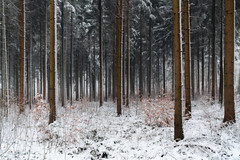 Snow in the forest (ramvogel) Tags: sony a6300 sony18105mm switzerland forest tree snow winter zürich woodland fog mist