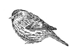 B169-365 one bird a day - B&W bird (1) (www.doortje.nl) Tags: vogel pájaro uccello passarinho طائر oiseau птица birdo voël 鸟 doortjenl 1tekeningperdagnl pen ink inkt