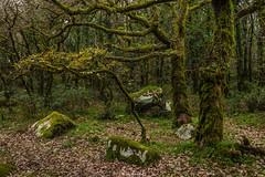 Santuario del bosque (Pablo Moreno Moral) Tags: los alcornocales cádiz bosque green verde forest trees laurel ngc