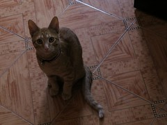 Napoleón (jorluis3098) Tags: cat gat kat see house canon camera eco ambiental ama amateur life light darkness shadow