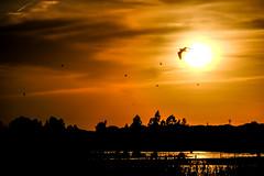 Atardecer en el Rocio (ameliapardo) Tags: rocio almonte atardecer sol cielo aves agua nubes naturaleza andalucia españa fujixt2 fujinon70200