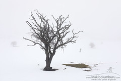 ANTXINTXIKA (Obikani) Tags: navarra frost snow snowy day winter season urbasa cold white beautiful mist nature ice freeze branch bright view beauty scene landscape outdoor forest background natural light holiday fairytale nafarroa storm navarre woods black blue magic rural country plant frosty scenic weather nobody sky tree field isolated land empty bare lonely