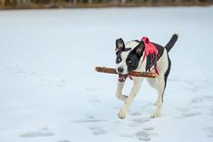 Bruce (luke.me.up) Tags: nikon z6 nikonz6 50mm nikons50mm dog dogs dogphotography
