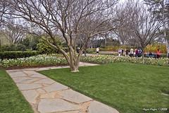 IMG_5626 (Roger Kiefer) Tags: dallas arboretum outdoors beauty nature landscape