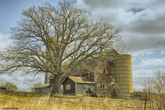 Big Tree (gabi-h) Tags: tree barn redbarn rural farm princeedwardcounty april spring barebranches cloudy sky gabih ontario grass drygrass field silo windows