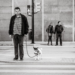 patiently waiting (Gerard Koopen) Tags: malaga spain espana city urban straat street straatfotografie streetphotography candid streetlife people man men woman dog trafficlight waiting patientlywaiting blackandwhiteonly blackandwhite noir sony sonyalpha a7iii 85mm 24105mm 2019 gerardkoopen gerardkoopenphotography littledoglaughednoiret