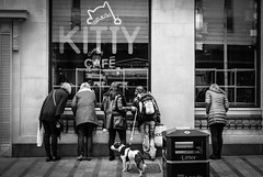 Kitty Cafe (The Green Album) Tags: kitty cafe leeds cats onlookers interested window dog disinterested owners candid street photography fujifilm xt2
