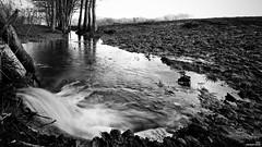 Débordement (Un jour en France) Tags: monochrome canonef1635mmf28liiusm canoneos6dmarkii noiretblanc noiretblancfrance ruisseau arbre campagne nature