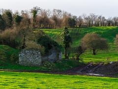 Morning Light Ireland (kckelleher11) Tags: 2019 40150mm february ireland olympus cottage em5 f28 field grass green house mzuiko morning omd ruin trees