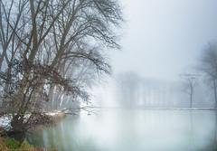 Lean towards the light (Ingeborg Ruyken) Tags: sneeuw morning empel mist instagram 500pxs fog natuurfotografie ochtend flickr snow