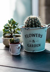 Blurred background botanical bright - Credit to https://homegets.com/ (davidstewartgets) Tags: blurred background botanical bright bucket cactuses closeup colors decoration flowerpot green growth indoors little plants pot potted plant succulent