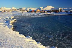 Hillesøya (Martin Third) Tags: hillesøya norway scandinavia island sea coast coastline shore shoreline bay winter snow ice arctic arcticcircle troms hillesoya