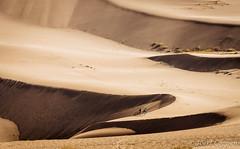 Khongoryn Els (joeri-c) Tags: khongorynels khongoryn sand dune sanddune gobi desert gobidesert mongolia asia travel nomad nomads nomadic tourism duutmankhan singingsands gobigurvansaikhannationalpark landscape nature arid dry nikon d750