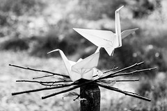 Zen and the Art of Parenting (belleshaw) Tags: blackandwhite ranchosantaanabotanicgarden claremont origamiinthegarden exhibit sculpture origami metal nest leaves branches cranes robertjlang kevinbox birds flight flying sticks detail garden