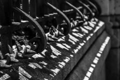 Iron fence (Jose Rahona) Tags: valla fence metal hierro iron forjado forged blancoynegro blackandwhite bw monochrome fencefriday fencedfriday