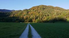 Zeppelinhöhe Herbst (Aah-Yeah) Tags: herbst autumn tree wald forest achental chiemgau bayern zeppelinhöhe grassau