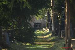 IMG_8314 (Pfluegl) Tags: wien vienna zentralfriedhof graveyard europe eu europa österreich austria chpfluegl chpflügl christian pflügl pfluegl spring frühling simmering