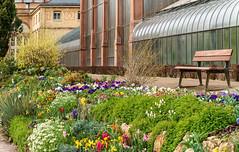 Blumenbeet (KaAuenwasser) Tags: blumenbeet botanischergarten garten beet anlage park pflanzen blumen