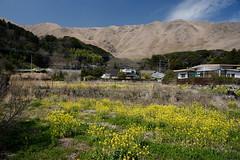 20190320a73_6247 (Gansan00) Tags: lce7m3 α7ⅲ sony japan 大分県 oita 日本 beepu 別府 landscape snaps ブラリ旅 03月 fe24105f4
